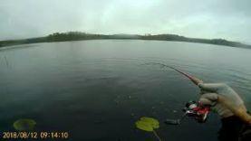 Рыбалка в августе (Карелия). Лесная ламба.