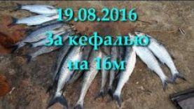 Подводная охота в Крыму на кефаль в августе 2016