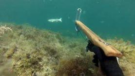 Подводная охота, Крым, Тарханкутский прозрак.