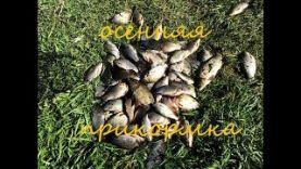 Рыбалка осенью в октябре на карася и карпа на поплавочную удочку, испытания новой прикормки