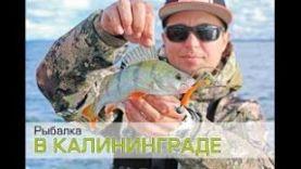 Ловля окуня и судака на джиг Рыбалка в Калининграде.
