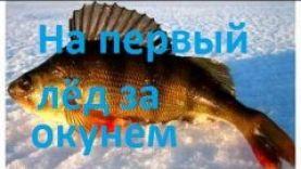 Подледный лов окуня – зимняя рыбалка
