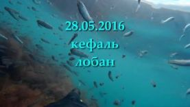 Подводная охота, лобан кефаль в Крыму май 2016