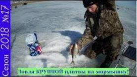 Ловля крупной плотвы на мормышку зимой в Бурятии