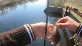 Рыбалка в Ростове-на-Дону, ловля окуня на левбердоне