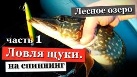Ловля щуки весной на спиннинг в Ленинградской области