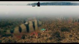 Ловля Окуня Зимой на Балансир | Зимняя рыбалка в Подмосковье