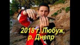 Голавль на майского жука. Рыбалка в Могилёвской области, Любуж 2018, р. Днепр