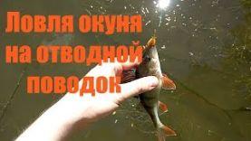 Ловля окуня на отводной поводок в августе реке Ока
