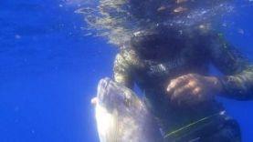 Подводная охота – 8 кг зубан, Новая Зеландия 2015