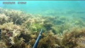 Подводная охота, Крым июнь 2016