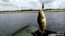 Окунь на спиннинг, летняя рыбалка в Челябинске