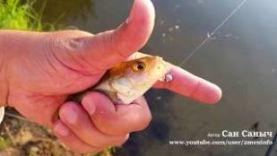 Рыбалка перед летней грозой, окуни на ультралайт