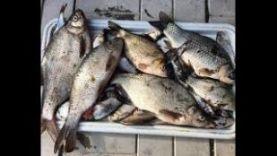 Рыбалка на поплавочную удочку: Лещь, Язь, Карась, Красноперка, Плотва