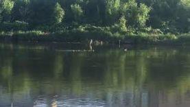 Тула Река УПА отдых природа Рыбалка