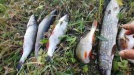 Рыбалка на реке Вёрда, Рязанская область