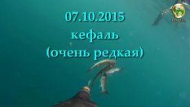 Подводная охота 2015, Крым- 15 см кефаль