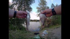 Рыбалка летом на поплавочную удочку Ловля чехони, плотвы, подлещика, окуня,уклейки на удочку