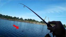 Ловля Окуня на Отводной Поводок и Микроджиг – Как Поймать Пасивного Окуня