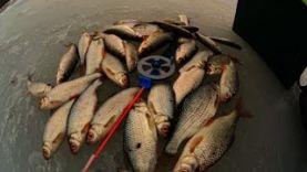 Ловля плотвы на безмотылку. Рыбалка со всеми вытекающими