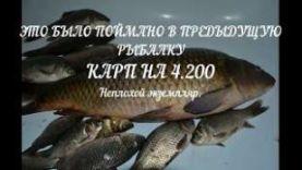 Улов на пруду Анино , Мордовия, Июнь 2018