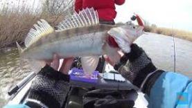 Когда нашёл что нужно судаку! Рыбалка в Астрахани