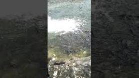 На рыбалки в прилепах Курская обл