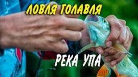Ловля голавля в Тульской области. Река Упа.