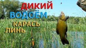 Рыбалка на поплавок. ЛИНЬ,КАРАСЬ… ДИКИЙ ВОДОЁМ.