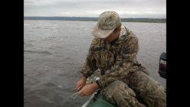 Рыбалка на сома с квоком р Волга