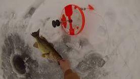 Рыбалка на щуку и окуня со льда на жерлицу, январь 2018 год