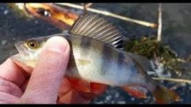 Обкатываем силикон от Toirtap.ru на рыбалке