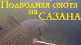 Подводная охота на сазана в Челябинской области