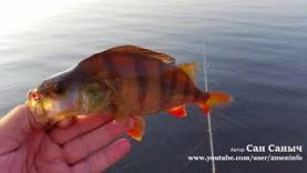 Рыбалка с лодки, река Тавда, окуни и щука на спиннинг