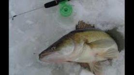 Зимняя рыбалка ловля судака зимой на блесну, балансир и вибы
