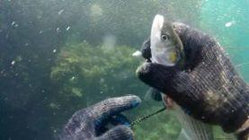 Подводная охота, Черное море Крым 2015