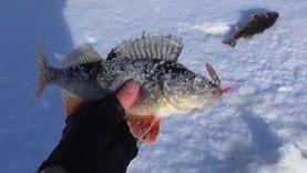 ЛОВЛЯ КРУПНОГО ОКУНЯ НА МОРМЫШКУ, Зимняя рыбалка в марте 2018
