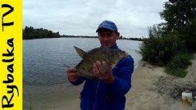 Рыбалка на КАРАСЯ и ЛЕЩА Фидер на Днепре