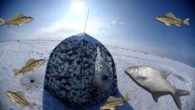 Весенняя рыбалка с палаткой на льду. Куршский залив. Ловля леща. 2018.