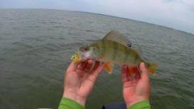 Ловля окуня и судака на ОВХ Crazy Fish Nimble 25″ в деле Ловля на джиг и отводной