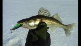Ловля судака на ратлин в зимой в Чебоксары