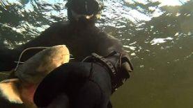 Подводная охота на сома 16,2 кг, Волга-Волгоград