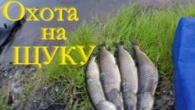 Подводная охота на щуку в Челябинской области, 2015