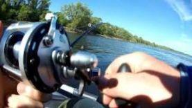 Рыбалка летом на Волге 2018, Ловля на кольцо.