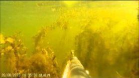 Подводная охота на видео, Волгоград -Волга 2015