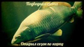 Подводная охота- открыл сезон по карпу, Днепропетровская обл., 2016