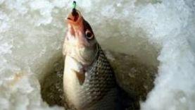 Зимняя рыбалка ловля плотвы, первый опыт. Калининград Куршский залив