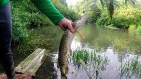 Рыбалка в подмосковье. Поймали щуку на микро речке (4К)
