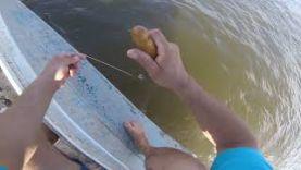 Рыбалка в Астрахани на квок