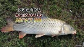 САЗАН, ЩУКА В АСТРАХАНИ, АВГУСТ 2018